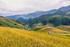 Mu Cang柴, Yenbai,北越南的米大阳台 免版税库存图片