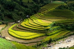 Mu Cang Chai Стоковое фото RF