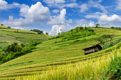 Mu Cang Chai Royalty-vrije Stock Afbeelding