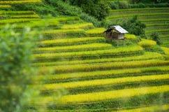 MU Cang Chai Lizenzfreies Stockfoto