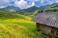 Mu Cang Chai Royaltyfria Foton