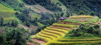 North VietNam. Mu cang chai provider ,Lao Cai , Viet Nam Stock Photo