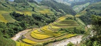 North VietNam. Mu cang chai provider ,Lao Cai  ,  Viet Nam Royalty Free Stock Image
