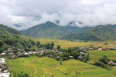 Mu Cang Chai Rice Terrace Fields Royaltyfria Bilder