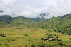 Mu Cang Chai Rice Terrace Fields Arkivfoto