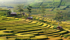 Mu Cang Chai terraces royalty free stock photo