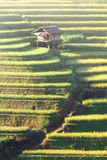 Mu Cang Chai terraces 04 Stock Photography