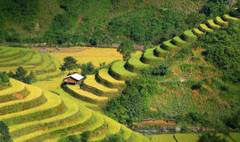 Mu Cang Chai terraces 06. Mu Cang Chai - Yen Bai - Viet Nam Royalty Free Stock Photos