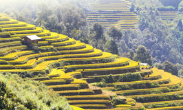 Mu Cang Chai terraces 08 Royalty Free Stock Image