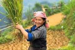 Mu Cang Chai, Vietnam - Sep 17, 2016: Portrait of minority Hmong woman harvests rice on terraced paddy field.  Stock Photo