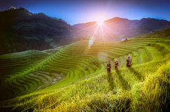 MU CANG CHAI, VIETNAM, September 19 , 2017:  Vietnamese children. Walking home on harvest rice field at sunset in Mu Cang Chai, Yenbai, northwestern Vietnam Stock Images