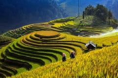 Terraced fields in Mu Cang Chai, Yen Bai