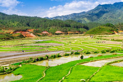 MU CANG CHAI, YENBAI, VIETNAM - MAY 16, 2014 - Ethnic farmers planti Stock Image