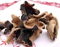 MU-erram os cogumelos Fotos de Stock