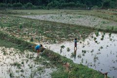 Muang Ngoi Neua村庄, Louangphrabang省,老挝- 2017年6月2日:男孩在Muang Ngoi Neua村庄设法抓在米的鱼 图库摄影