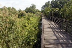 Muara Anke nature reserve Stock Photography