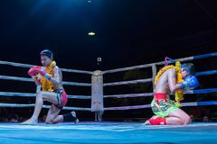Muay Thai in Chiang Mai. Muay Thai fight in Chiang Mai.  A muay thai kickboxer kneels and covers his face with his gloves during a pre-fight Stock Photography