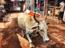 Mucca al mercato Immagine Stock
