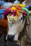 Mucca alla celebrazione di Thaipusam Fotografia Stock Libera da Diritti
