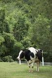 Mucca in azienda agricola Fotografia Stock Libera da Diritti
