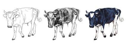 Mucca in bianco e nero Fotografia Stock Libera da Diritti