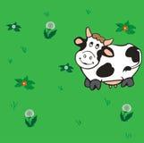 Mucca che cammina sul prato. Fotografia Stock