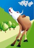 Mucca che mooing sul campo Immagini Stock