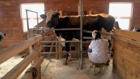 Mucca che munge processo sull'azienda agricola moderna fotografia stock libera da diritti