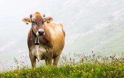 Mucca che pasce nella nebbia Fotografie Stock