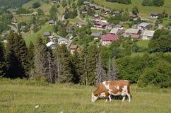 Mucca che pasce nelle alpi francesi Fotografie Stock
