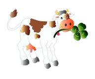 Mucca con il trifoglio Fotografie Stock Libere da Diritti