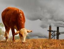 Mucca con inquinamento Fotografia Stock Libera da Diritti