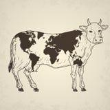 Mucca con la mappa di mondo Immagini Stock
