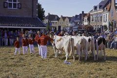 Mucca da latte che mostra concorso, concorrenza Fotografia Stock Libera da Diritti