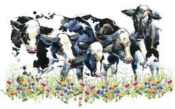 Mucca da latte sul campo illustrazione di stock