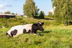 Mucca del paese su erba Fotografie Stock