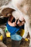 Mucca di mungitura dell'agricoltore Fotografia Stock Libera da Diritti