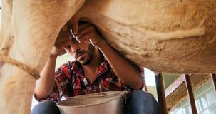 Mucca di mungitura dell'uomo nel bestiame dell'azienda agricola in ranch fotografia stock libera da diritti