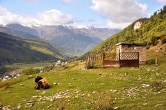 Mucca e cabina nelle montagne immagine stock libera da diritti