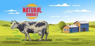 Mucca ed azienda agricola Immagini Stock Libere da Diritti