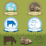 Mucca, insieme di etichette d'annata Fotografie Stock