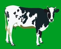 Mucca macchiata Immagini Stock