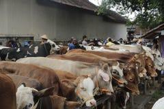 Mucca nel mercato tradizionale Fotografia Stock