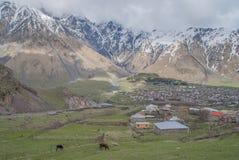 Mucca nella radice della montagna Kazbek Immagine Stock