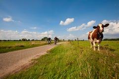 Mucca olandese Fotografie Stock Libere da Diritti