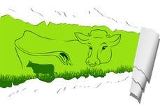 Mucca organica Fotografia Stock Libera da Diritti