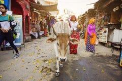 Mucca santa che cammina liberamente in vie della città di Pushkar Immagini Stock Libere da Diritti