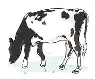 Mucca su un fondo bianco Immagine Stock Libera da Diritti