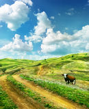 Mucca su un prato di estate Immagine Stock Libera da Diritti