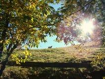 Mucca su una collina Immagine Stock Libera da Diritti